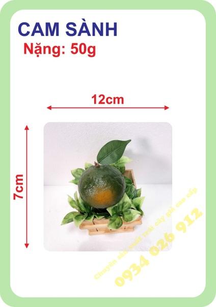 ( Gía sập sàn) trái cam sành mô hình việt nam công nghệ thái lan