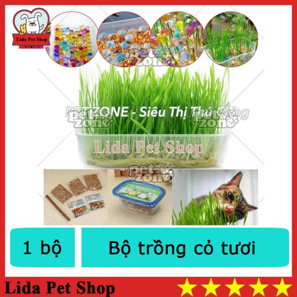 HN - Bộ trồng cỏ tươi cho mèo, bộ trồng cỏ mèo- Lida Pet Shop