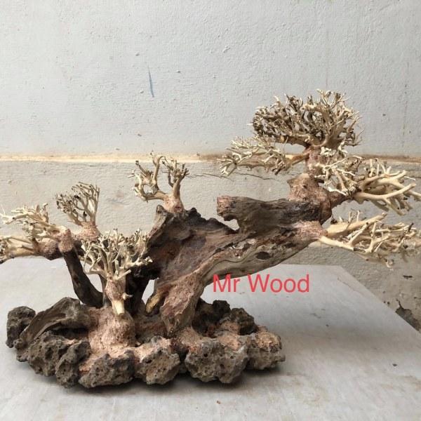 Lũa Bonsai Cành Nghiêng cao 25 dài 40- Xưởng Lũa Mr Wood