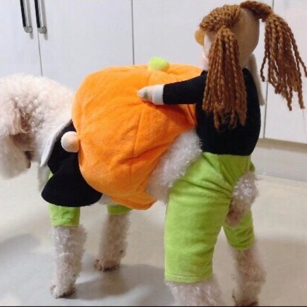 Bộ Độ Chó Cưỡi Bí Ngô Siêu Đáng Yêu Độc Lạ