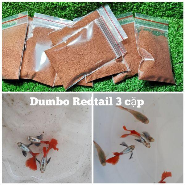 Cám cho Dumbo Redtail 3 đôi -Nga Guppy - Thức ăn cho cá