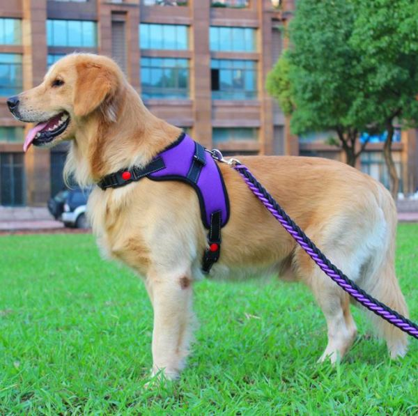 [HCM]Đai Yếm Kèm Dây Dắt Hàng Xịn Sò Dành Cho Chó