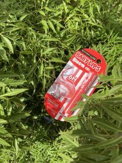 Son dưỡng môi Baby Lips Bloom Maybelline New York chống nắng SPF 16 (có màu) thumbnail