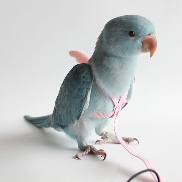 Bông Cải Xanh Đôi Cánh Thiên Thần Đồ Dùng Cho Chim Dây Thừng Bay, Cockatiel Chống Cắn, Dây Kéo Tập Luyện Ngoài Trời Cho Vẹt Hoa Mẫu Đơn Dây Dắt Chim Thú Cưng