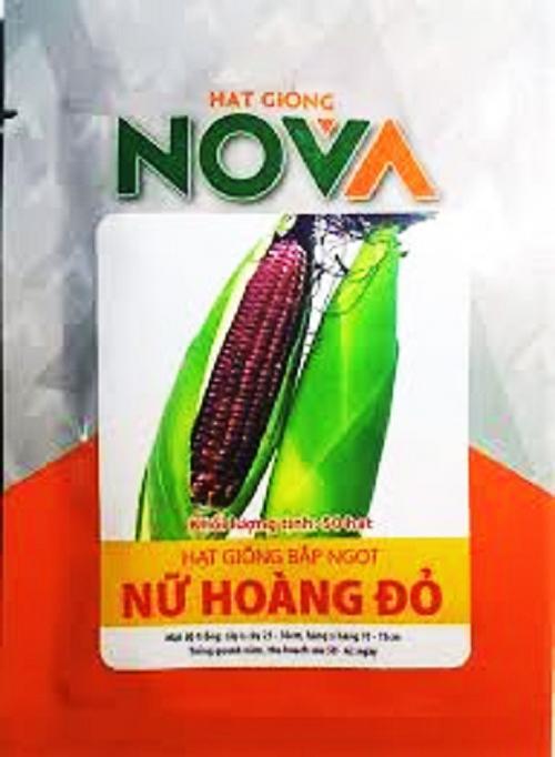 COMBO 10 GÓI  : Hạt giống Bắp Ngọt Nữ Hoàng Đỏ   _KLT  50 hạt .