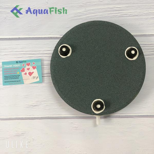 Đĩa sủi 20cm (dành cho bể cá)