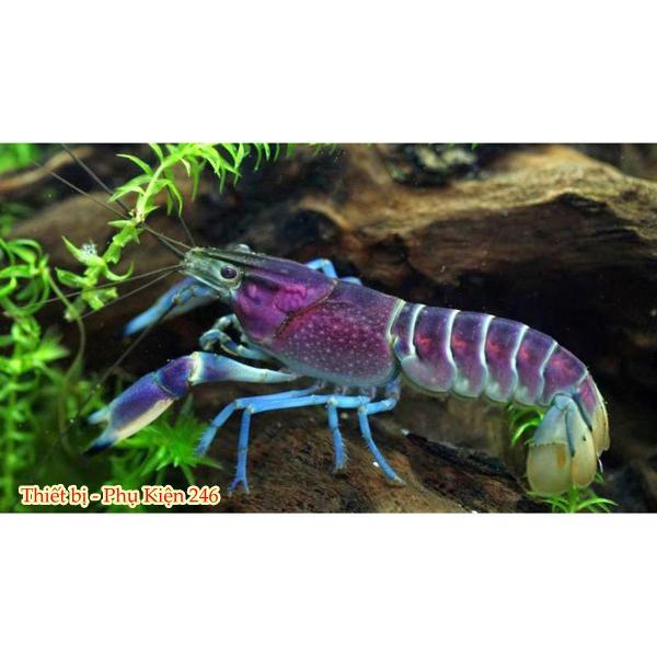 Thức ăn cho tôm tép cảnh Crawfish
