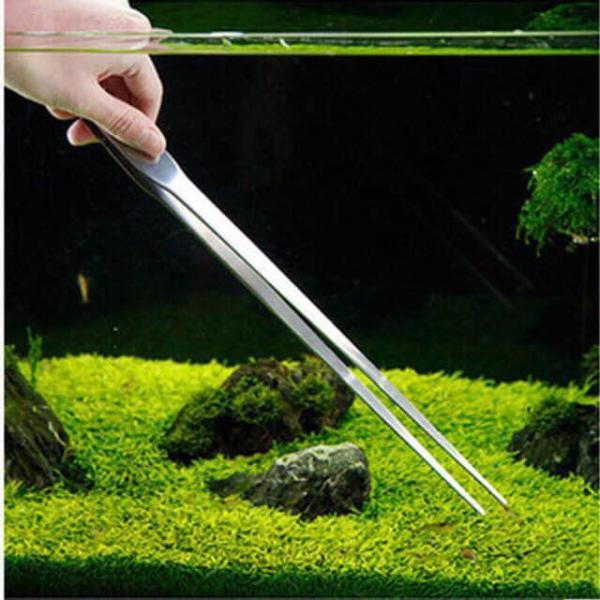 Nhíp mũi thẳng trồng cây thủy sinh