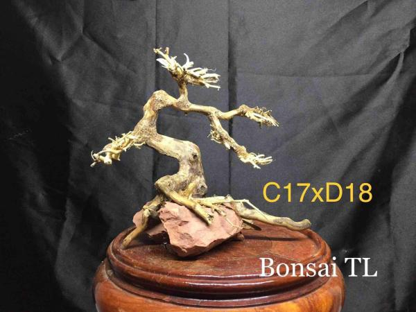 Bonsai bể nhỏ C17xD18