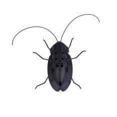 Hình ảnh Solar Power Cockroach Insect Bug Teaching Toy Gift - intl
