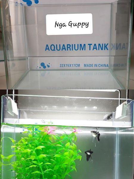 Bể cá đúc mặt cong 26 x 17 x 19 cm