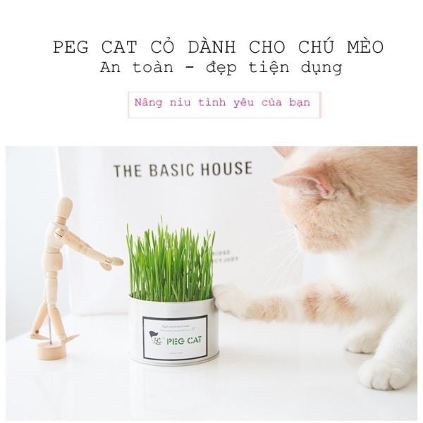 Cỏ mèo tươi, cỏ nếp dành cho chó mèo. Trị sa búi ruột. Hộp 50g