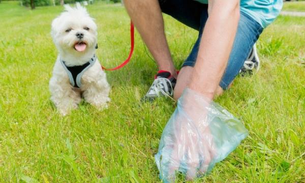 HN- Túi hốt phân chó túi nilon hót cứt chó (mỗi cuộn 15 túi) / túi hót kít chó / hướng dẫn sử dụng túi bốc kít chó / túi đựng phân chó / túi đựng kít chó / túi rác tự phân hủy / túi đựng rác / túi phân chó