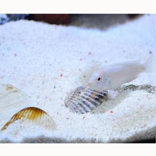 Cát Thạch Anh vật liệu lọc, trang trí bể cá, hồ thủy sinh (túi 200gr) thumbnail