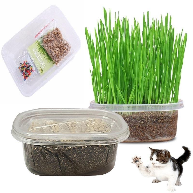 HCM- Cỏ mèo (3 loại) Đồ chơi cho mèo ngửi và gặm hạn chế búi lông tắc ruột trên mèo  tên khác- catnip mèo - bạc hà mèo gói hạt giống / tuyp cỏ mèo khô / hộp cỏ ---Phân loại