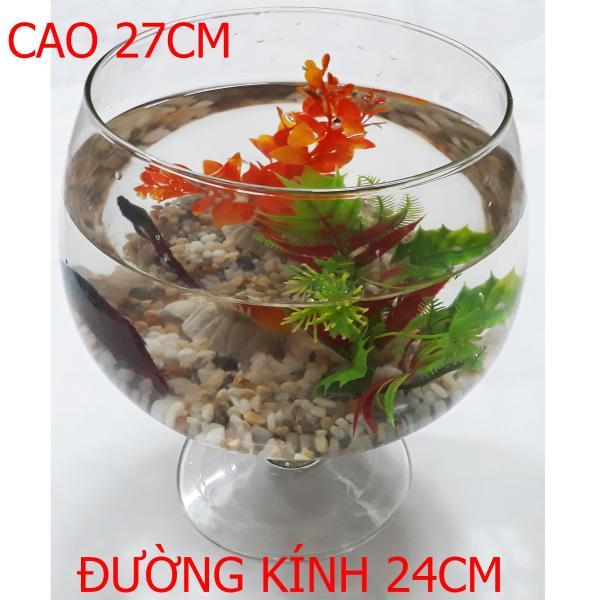 Bể Cá Ly Lớn - Hồ Cá Để Bàn - Chậu Cá Thủy Tinh LC-1 27x24x24