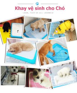 [HCM]Khay vệ sinh cho Chó Đi vệ sinh đúng chỗ Huấn luyện Thú Cưng Mẫu Mới Loại Tốt thumbnail