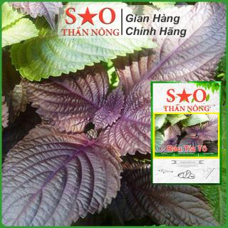 Hạt giống Tía Tô Sao Thần Nông hạt giống rau thơm cao sản nhanh thu hoạch thumbnail