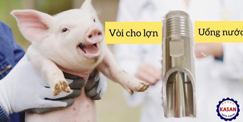 Vòi heo, vòi nước tự động cho heo, vòi lợn, vòi nước tự động cho lợn , vòi lợn inox, vòi heo inox, vòi tự động