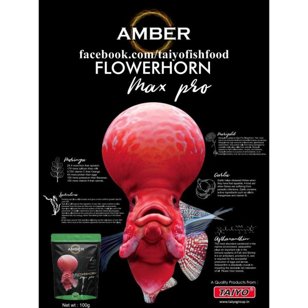 Thức ăn Amber cho cá la hán lên đầu – Gói Màu xanh