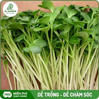 Hạt giống Rau mầm cải bẹ xanh Mi Garden, hạt giống dễ trồng, dễ chăm sóc, nảy mầm sau 1-2 ngày, thu hoạch sau 3-5 ngày, dùng làm salad hoặc ăn kèm mì tôm, 5g túi (500 hạt) thumbnail