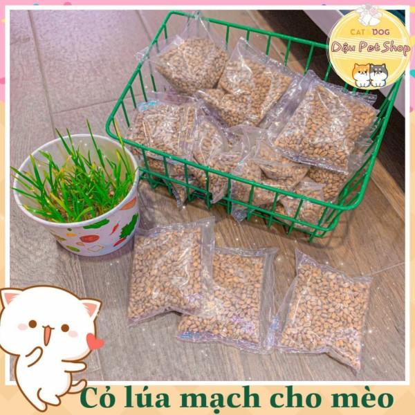 Hạt giống cỏ lúa mì (lúa mạch) cho mèo, đa dạng mẫu mã, chất lượng sản phẩm đảm bảo và cam kết hàng đúng như mô tả