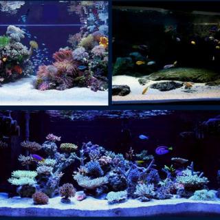 Cát Thạch Anh vật liệu lọc, trang trí bể cá, hồ thủy sinh (túi 200gr) 5