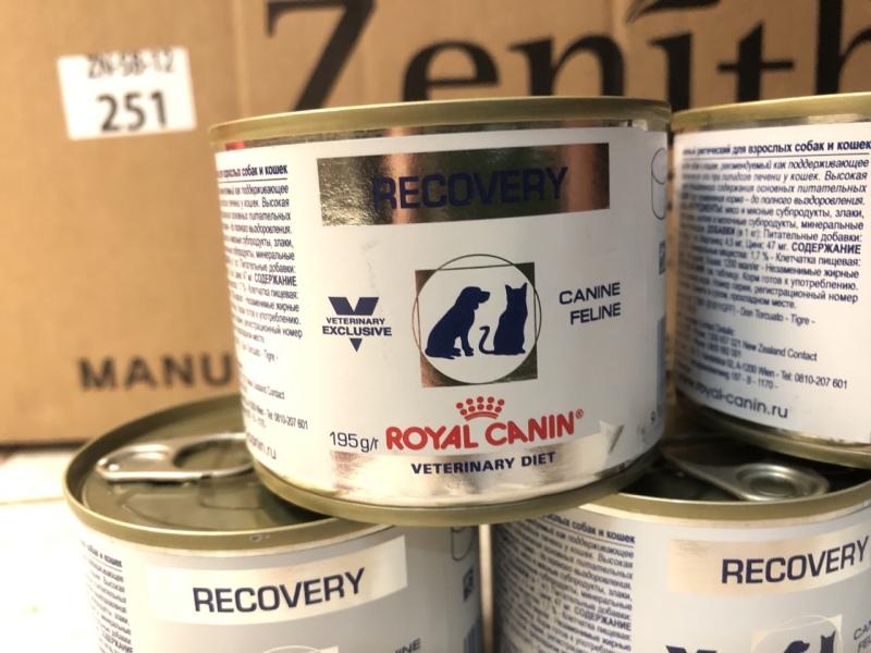 Pate Royal Canin Recovery - phục hồi cho chó mèo