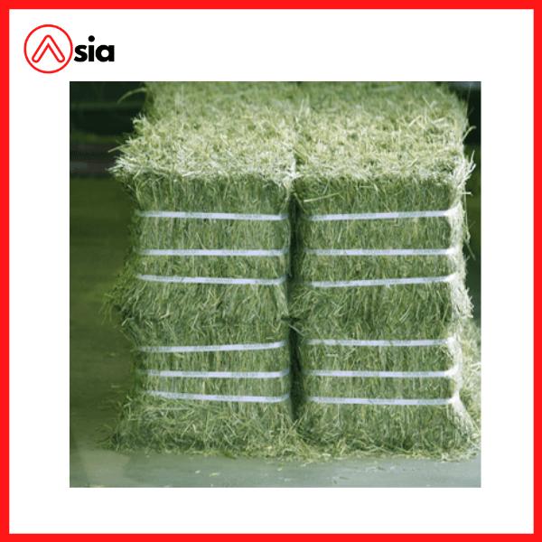 Kiện cỏ khô Alfalfa nhập khẩu Mỹ (kiện 25-30kg)