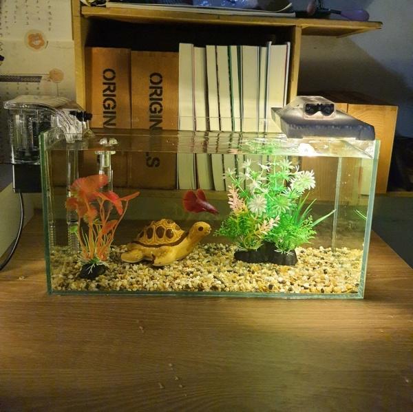 Set bể cá 33 cm và 8 món (bể, sỏi nền, máy lọc, men pha lê, đèn led gắn xốp, cây nhựa mini và vừa, pk nhỏ)