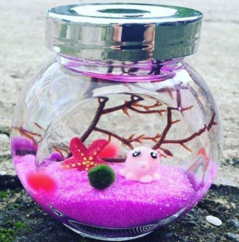 Tiểu cảnh trang trí marimo tảo cầu may mắn - Quà tặng dễ thương