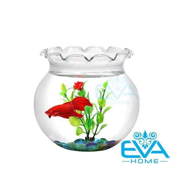 Hồ Cá Bể Cá Miệng Bèo Thuỷ Tinh B1 13 x 14 Cm Tặng Kèm Sỏi Và Rong Trang Trí
