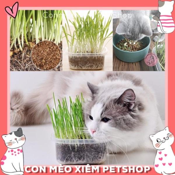 Bộ Trồng Cỏ Cho Mèo Cỏ Lúa Mì Dễ Trồng, Tốt Cho Hệ Tiêu Hoá, Dạ Dày Thải Búi Lông, Sạch Răng Simple Pet Shop