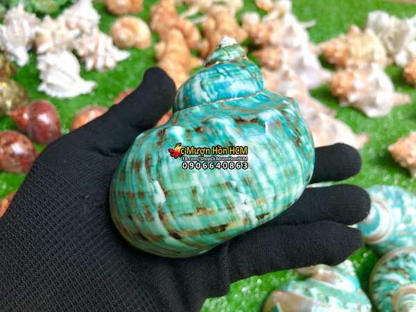 [10cm] Quà tặng từ Biển - Vỏ Xà Cừ Cẩm Thạch - Vỏ Ốc Trang Trí - Siêu Đẹp - Giá Rẻ - Vỏ Ốc Mượn Hồn - Vỏ Ốc Biển Tự Nhiên