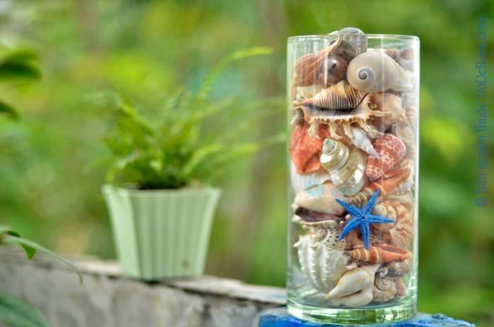 Mua Vỏ ốc biển trang trí