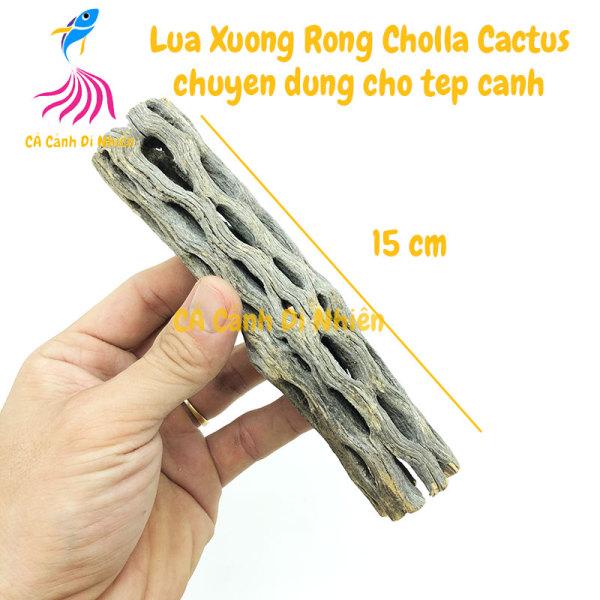 Lũa xương rồng Cholla Cactus size 15 cm chuyên dùng cho tép cảnh