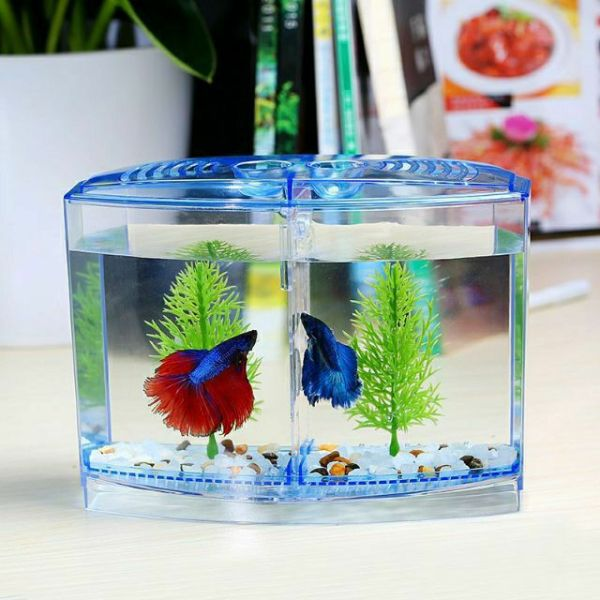 Bể Nhựa Nuôi Cá Betta Mini 2 In 1 Hồ Cá Để Bàn Size 18X14X10 Cm - Betta Box - Guppyxanh
