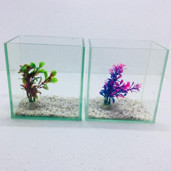 Bể cá mini để bàn combo 2 bể