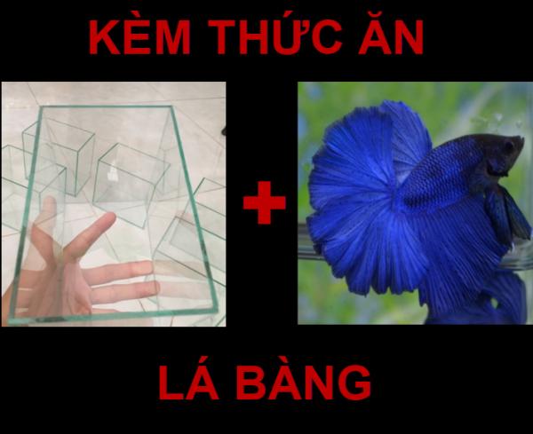 HỒ KÍNH 10X18 KÈM BETTA BLUE HM - THỨC ĂN - PHỤ KIỆN