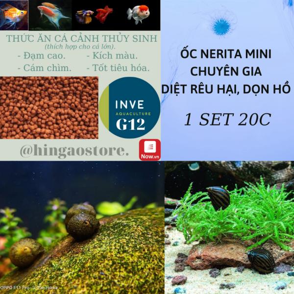 Set 20c Ốc Nerita Mini chuyên gia diệt rêu - dọn hồ - Phụ kiện trang trí hồ cá thủy sinh   Hingaostore.