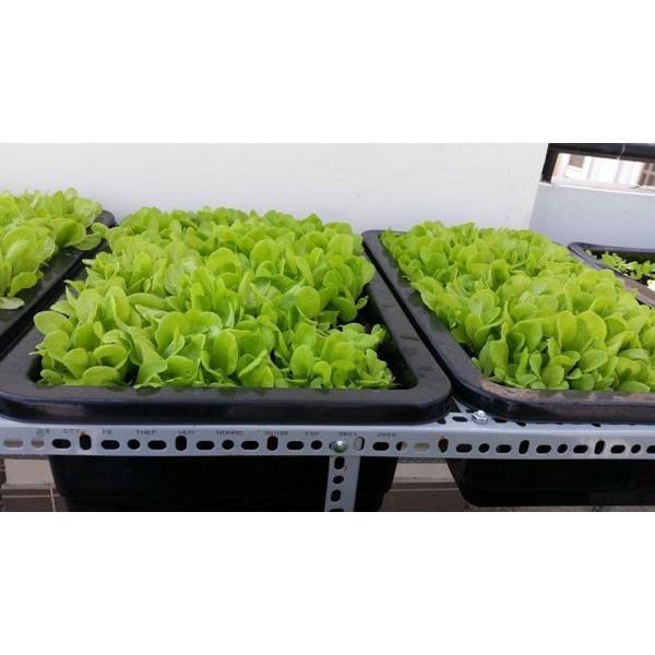 Combo 5 Khay trồng rau thông minh 65cm (kích thước 65 x 43 x 16cm)