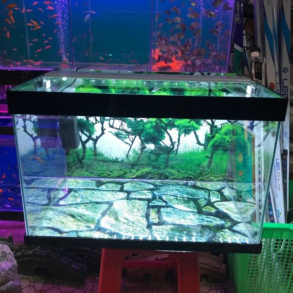 Combo hồ cá dài 60cm cao 40cm rộng 35cm. Có máy lọc có đèn led sản phẩm như hình