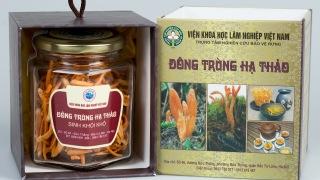 Đông trùng hạ thảo sinh khối khô Minh Thành thumbnail