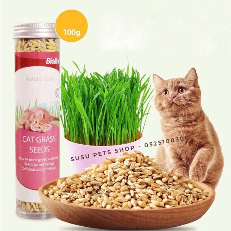 Hạt Giống Trồng Cỏ Tươi Cho Mèo Cat Grass Seeds Bioline 100g