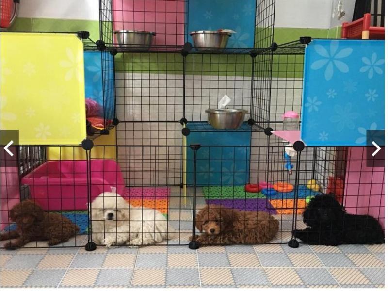 Tấm ghép chuồng quây cho thú cưng chó mèo (BÁN LẺ theo tấm) hàng có sẵn, số lượng lớn, tặng kèm chốt nối