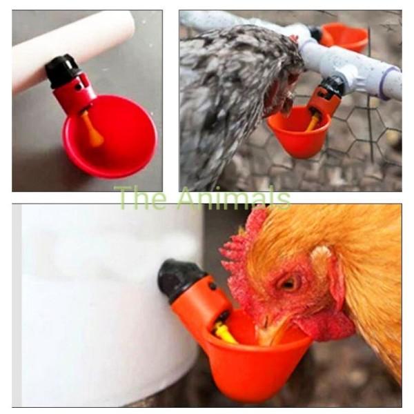 Máng uống nước tự động cho gà nuôi công nghiệp - Cốc uống nước tự động- Bát uống nước tự động