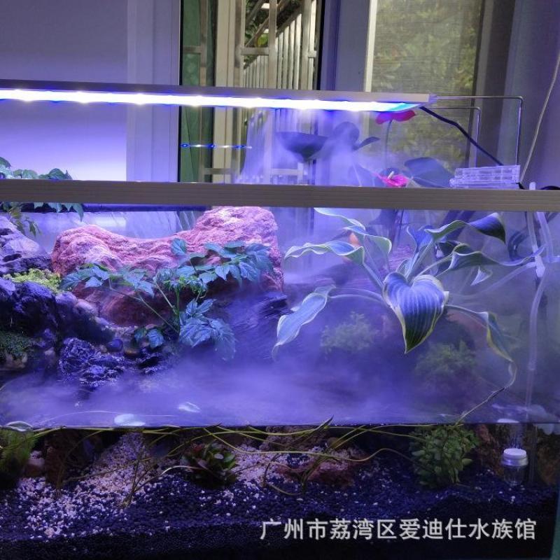 Máy tạo khói kết hợp Đèn led đổi màu cho hồ bán cạn, hồ cá