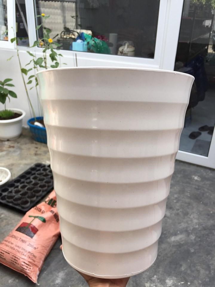 5 Chậu tròn trụ cao ATP 24x32cm màu trắng