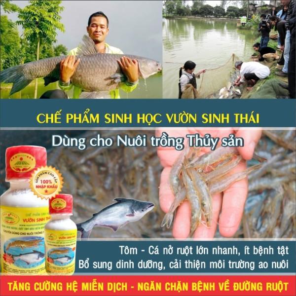 Chế Phẩm Sinh Học Vườn Sinh Thái Cho Thủy Sản (Tôm, Cá..)