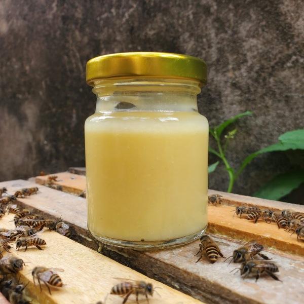 Sữa ong chúa tươi 100g cam kết nguyên chất 100% ai phát hiện hàng pha đền gấp 10 lần